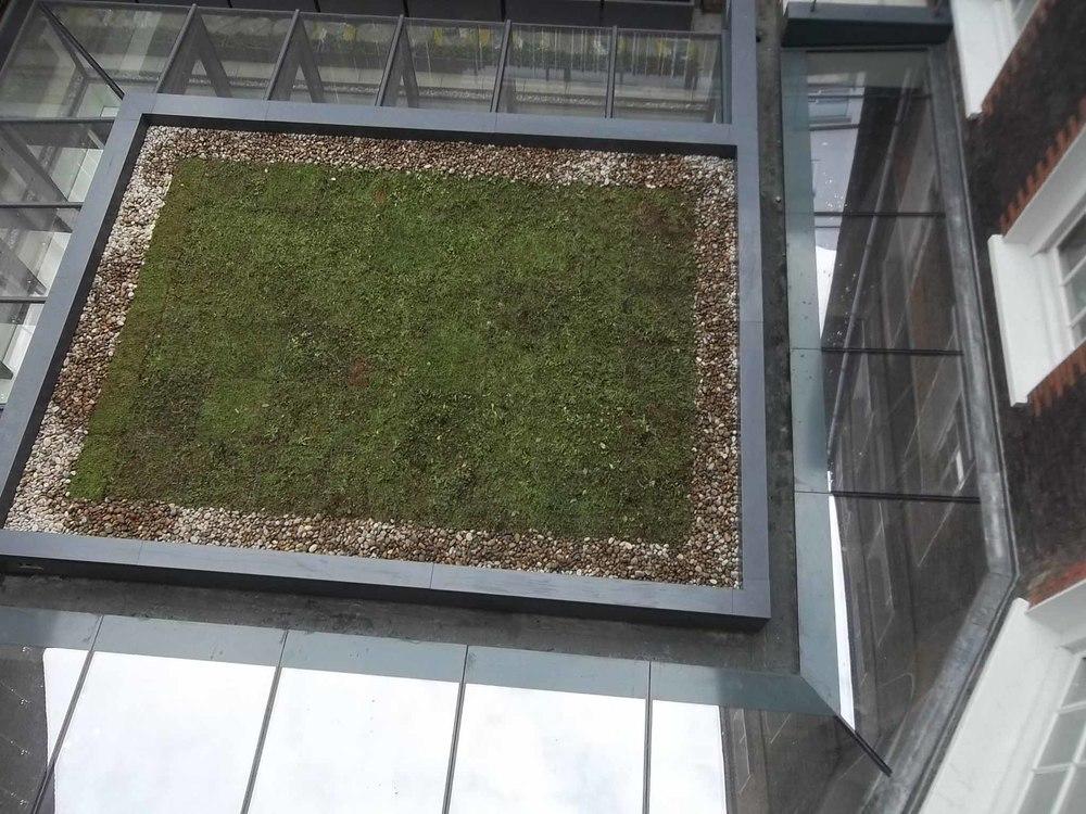 buy-grufekit-green-living-sedum-roofs-at-roofinglines-5